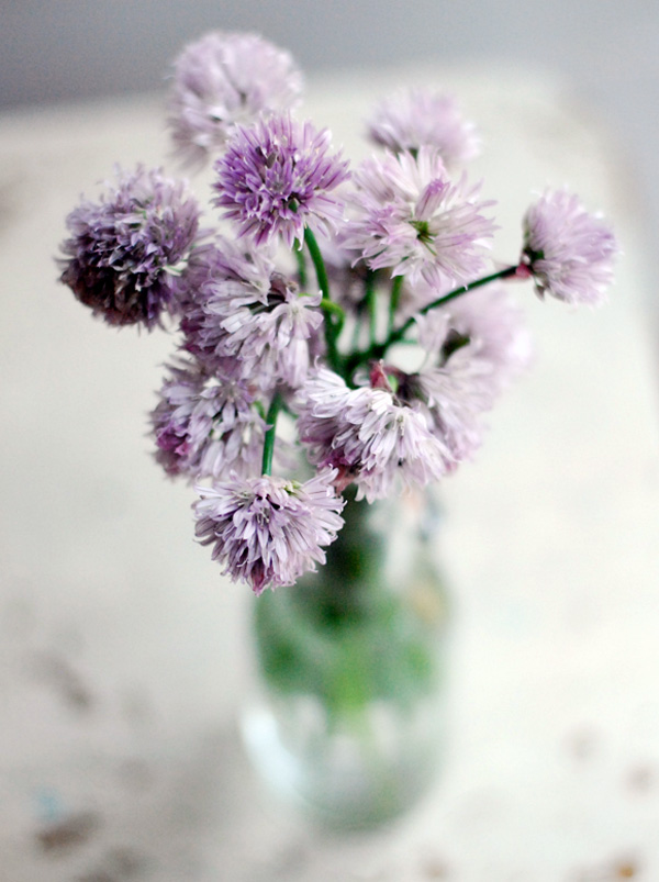 chive blossoms // brooklyn supper