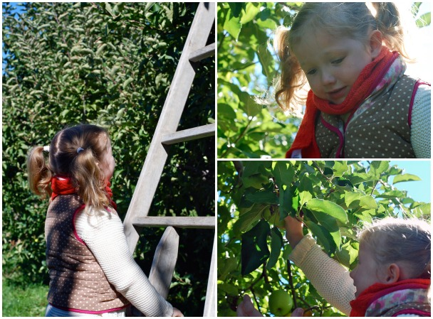 apple picking // brooklyn supper