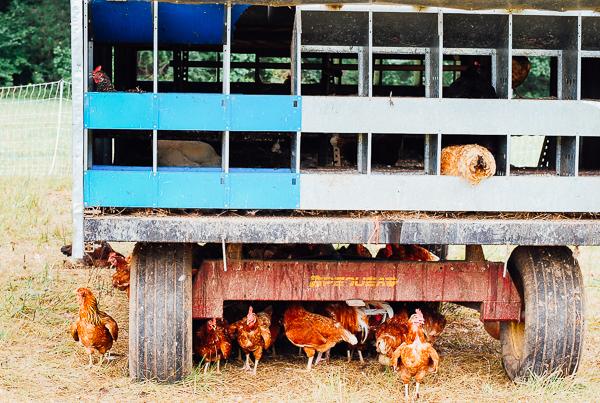 bell air farm, meet yer eats farm tour // brooklyn supper