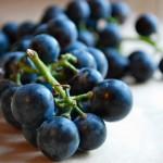 now in season: concord grapes