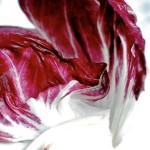 now in season: radicchio